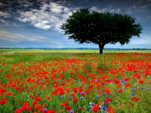 Flanders Fields.  A poignant image for Memorial Day.