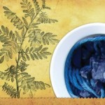 Indigo plant and the dye from it.