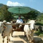 The only time I have ridden in an oxcart and it was a bumpy, uncomfortable ride!