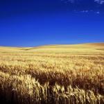Kansas fields