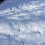 Can you identify these tracks? I bet our Czechs in this story could!