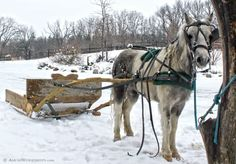 1951 horse and sled